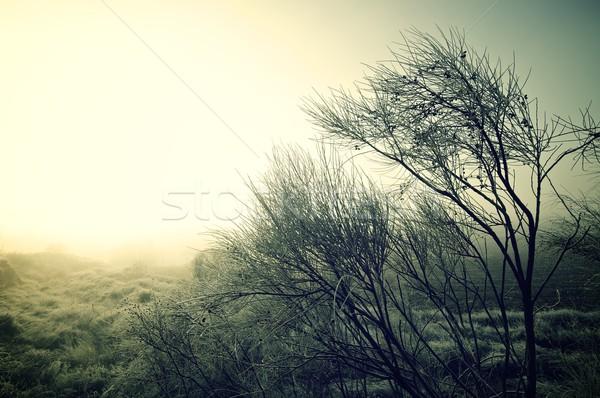 зима холодно ледяной утра небе дерево Сток-фото © pedrosala