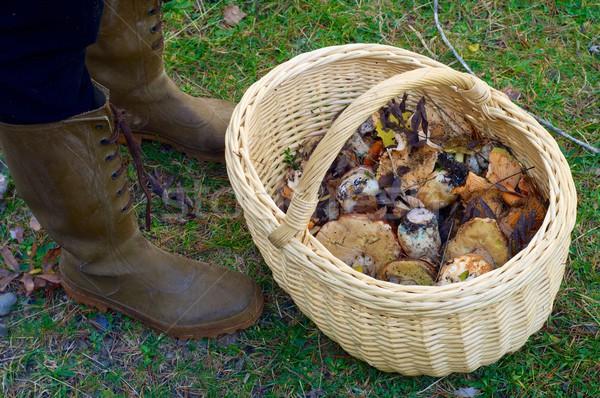 mushroom basket Stock photo © pedrosala