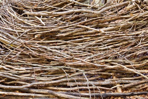 Yakacak odun vadi manzara arka plan park Avrupa Stok fotoğraf © pedrosala