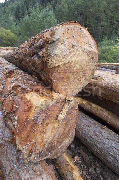 группа соснового лес долины дерево древесины Сток-фото © pedrosala