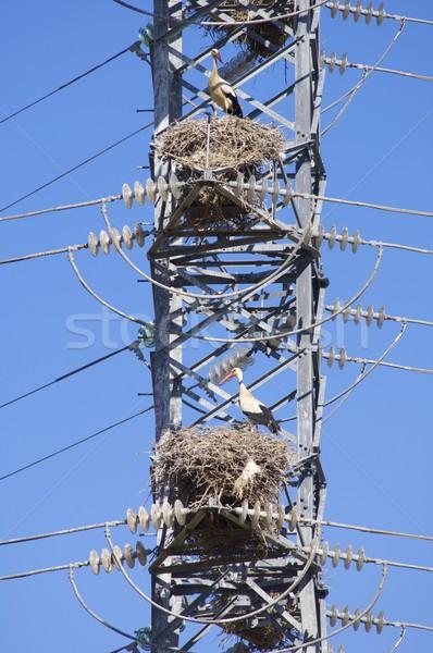 高い 緊張 塔 空 技術 金属 ストックフォト © pedrosala
