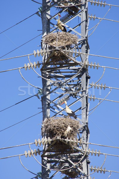 Hoog spanning toren hemel technologie metaal Stockfoto © pedrosala