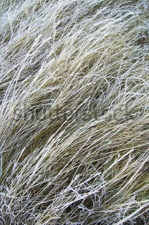 çim don soyut görüntü çayır doku Stok fotoğraf © pedrosala