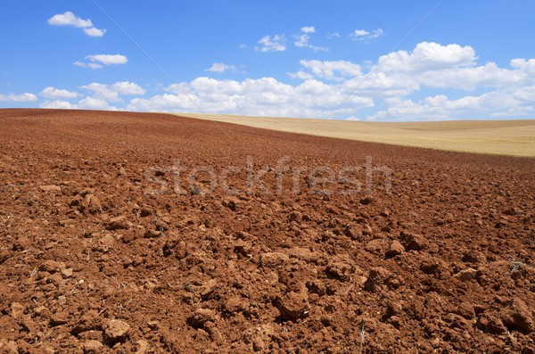 plowed field Stock photo © pedrosala
