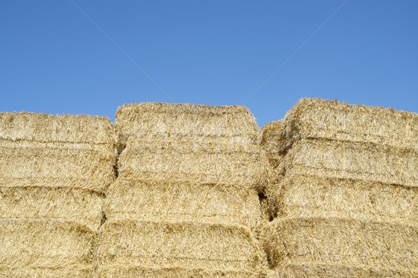 Stro blauwe hemel hemel textuur voedsel Stockfoto © pedrosala