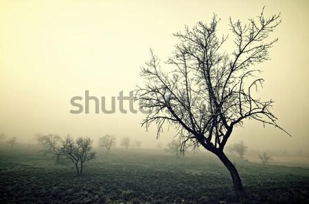 Stockfoto: Koud · ochtend · bomen · mist · natuur