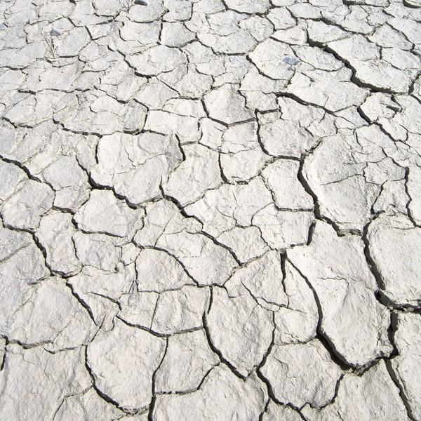 Repedt Föld részlet nyár homok növény Stock fotó © pedrosala