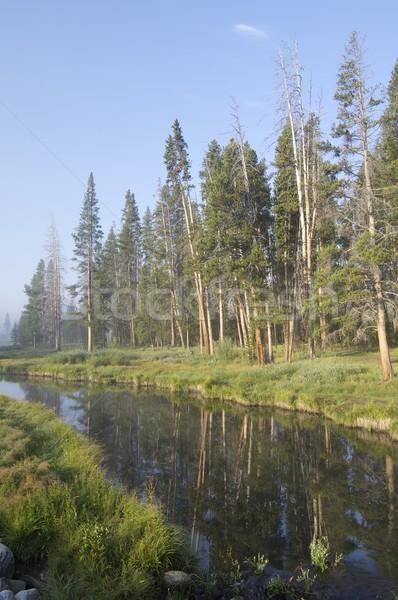Yellowstone landscape Stock photo © pedrosala