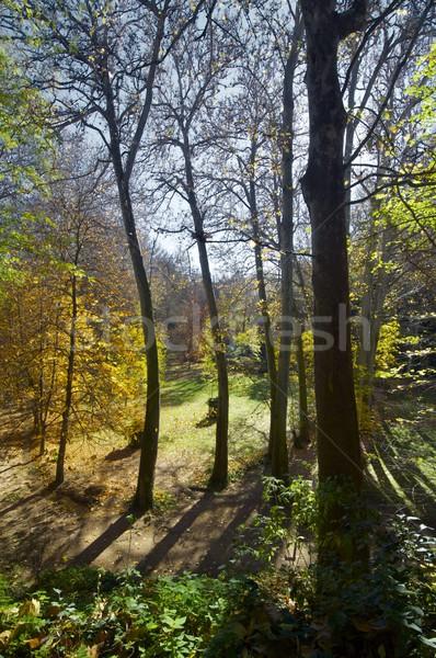 autumn forest Stock photo © pedrosala