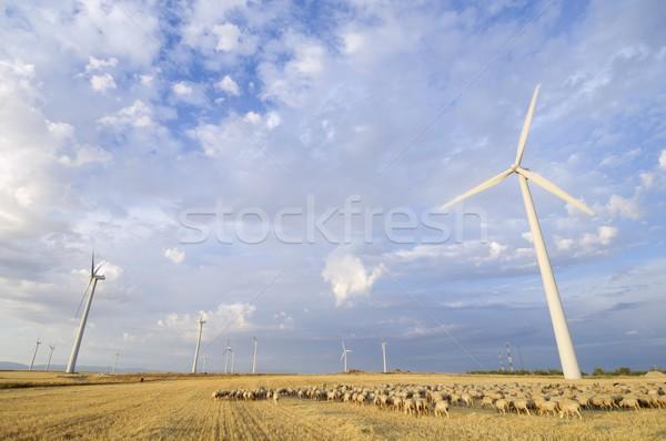 flock and windmills Stock photo © pedrosala