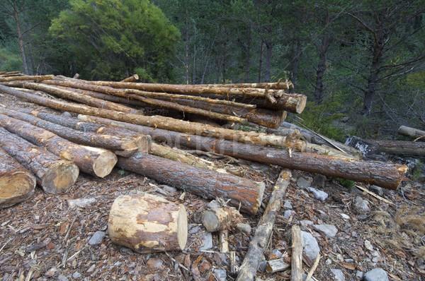 Stok fotoğraf: Grup · çam · orman · vadi · ağaç · ahşap