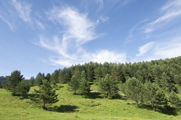 のどかな 風景 表示 雲 春 木材 ストックフォト © pedrosala
