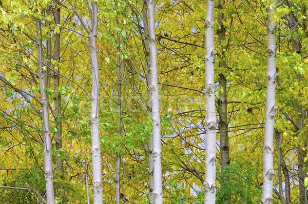 Autumn colors Stock photo © pedrosala
