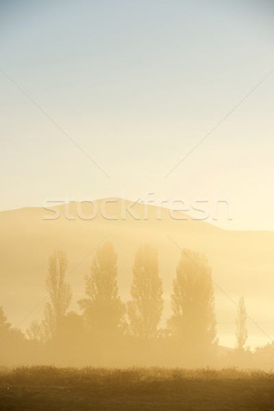Brouillard sunrise silhouette profile randonnée froid Photo stock © pedrosala