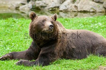 Frankrijk beer gevangenschap natuur Stockfoto © pedrosala