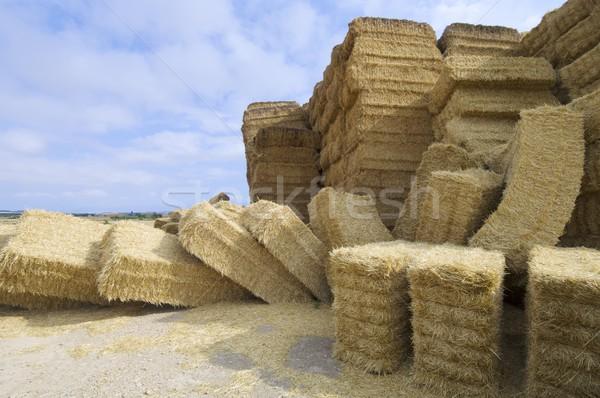 Słomy mętny niebo żywności trawy Zdjęcia stock © pedrosala