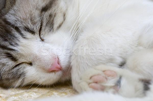 Macska fej szeretet szemek zöld száj Stock fotó © pedrosala