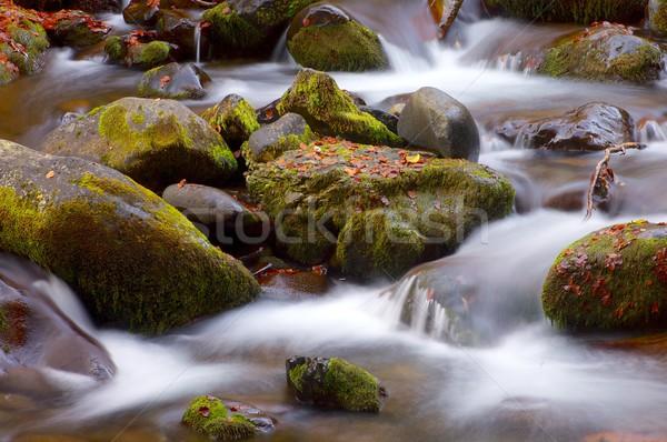 Ipeksi dere orman sonbahar vadi yaprak Stok fotoğraf © pedrosala
