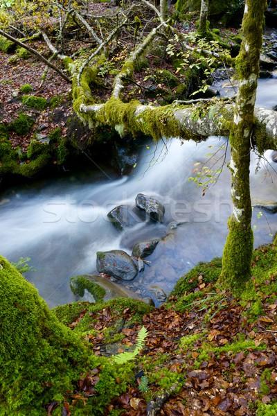 Dere ipeksi dere orman vadi doğa Stok fotoğraf © pedrosala