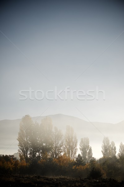 Fog in the Pyrenees Stock photo © pedrosala