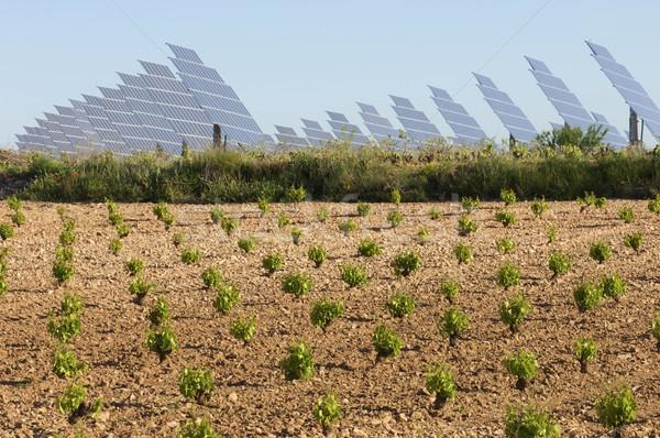 vineyard and solar panels Stock photo © pedrosala