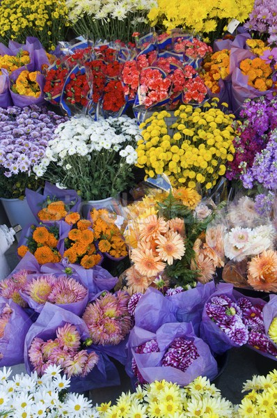 Flores numeroso presentes negócio flor folha Foto stock © pedrosala