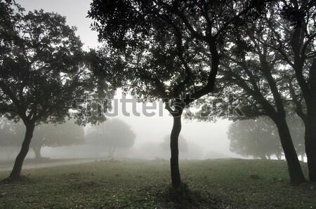 fog Stock photo © pedrosala