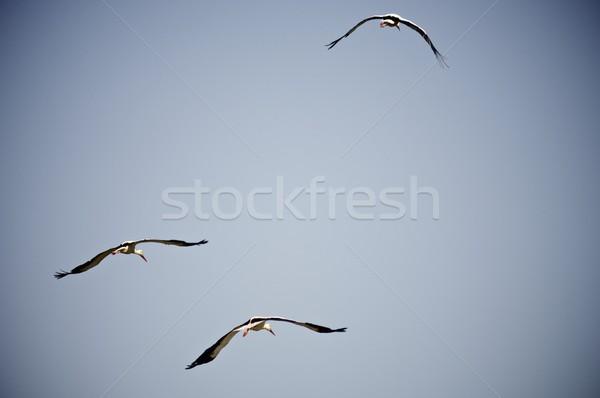 Flying синий небе ребенка птица Сток-фото © pedrosala