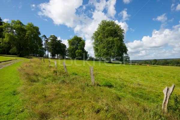 Normandia verde prado árvores França céu Foto stock © pedrosala