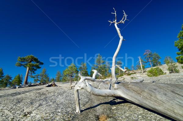 Yosemite krajobraz drzew rock California Zdjęcia stock © pedrosala