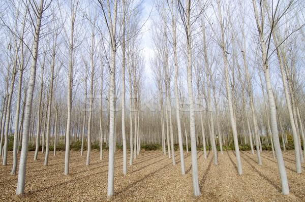 Stock fotó: Tél · erdő · kilátás · fa · természet · levél
