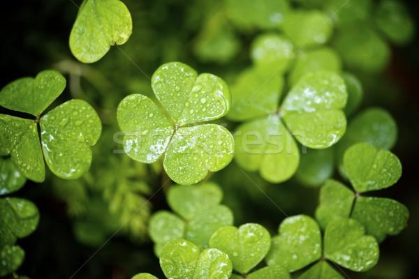 Vallei gras ontwerp blad achtergrond Stockfoto © pedrosala