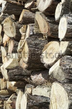 группа соснового древесины строительство природы деревья Сток-фото © pedrosala