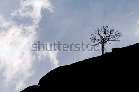 Profile tree with clouds and sky Stock photo © pedrosala