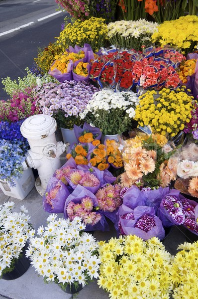 flowers Stock photo © pedrosala