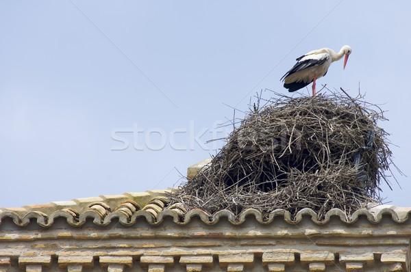 Storch weiß Haus Frühling Natur Stock foto © pedrosala