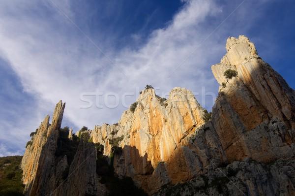 Iğneler bulutlu gökyüzü ağaç orman doğa Stok fotoğraf © pedrosala