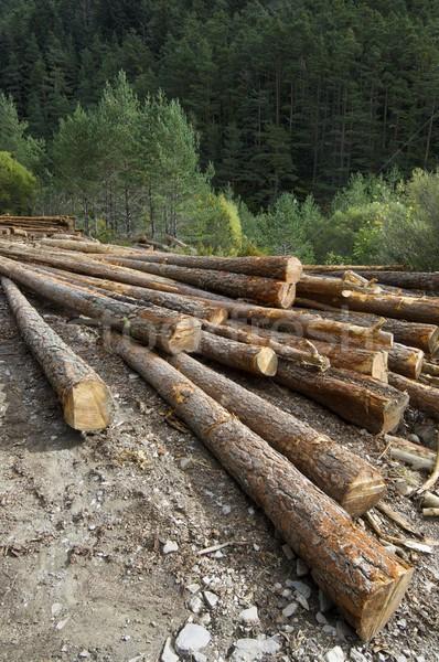 Stock fotó: Csoport · fenyőfa · erdő · völgy · fa · fa
