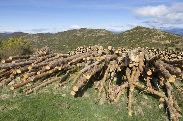 ストックフォト: グループ · 松 · 空 · テクスチャ · 木材 · 風景