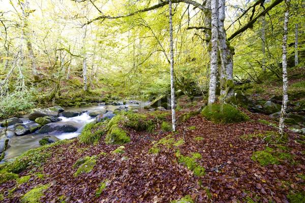 Patak selymes folyam erdő völgy levél Stock fotó © pedrosala