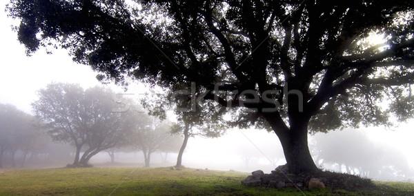 through the fog Stock photo © pedrosala
