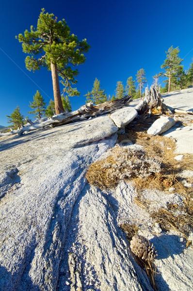 ストックフォト: ヨセミテ · 風景 · 木 · 岩 · ヨセミテ国立公園 · カリフォルニア