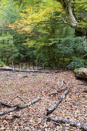 Zdjęcia stock: Korzenie · drzewo · duży · parku · drewna · słońce