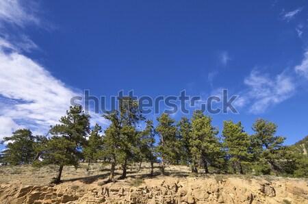 Rocky Mountain National Park Stock photo © pedrosala