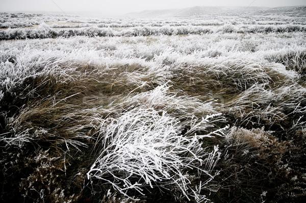 Fagyos tájkép textúra természet hó fehér Stock fotó © pedrosala