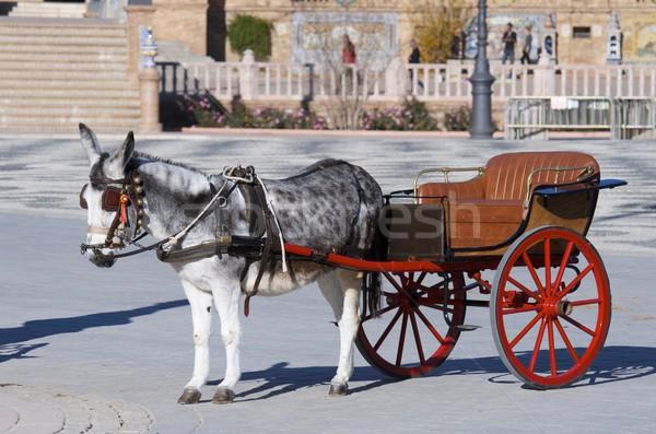 Pequeno treinador burro turista crianças andaluzia Foto stock © pedrosala
