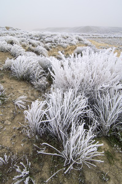Mroźny krajobraz tekstury chmury śniegu zimą Zdjęcia stock © pedrosala