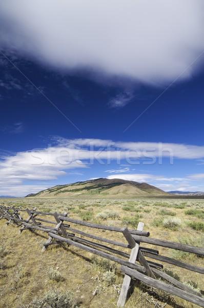 Meadow Stock photo © pedrosala