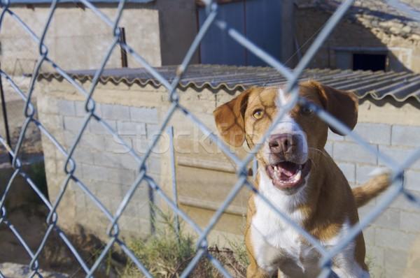 Guardião cão de guarda metal cerca casa liberdade Foto stock © pedrosala