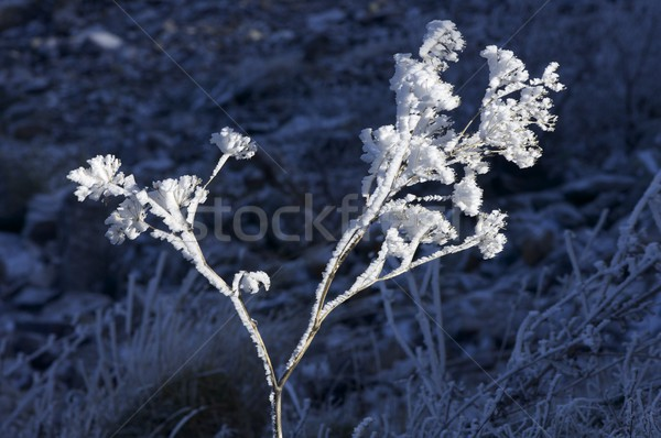 Don bitki doğal park çim soyut Stok fotoğraf © pedrosala